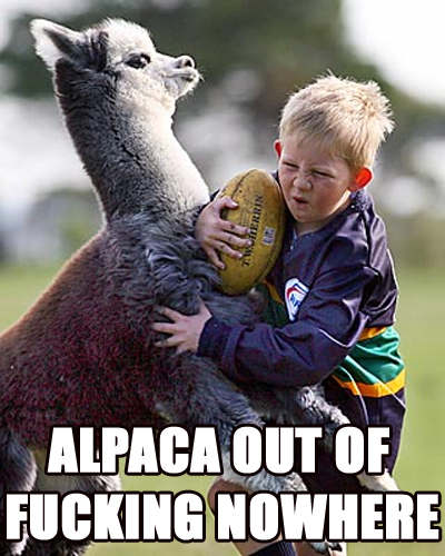 alpaca-out-of-fucking-nowhere