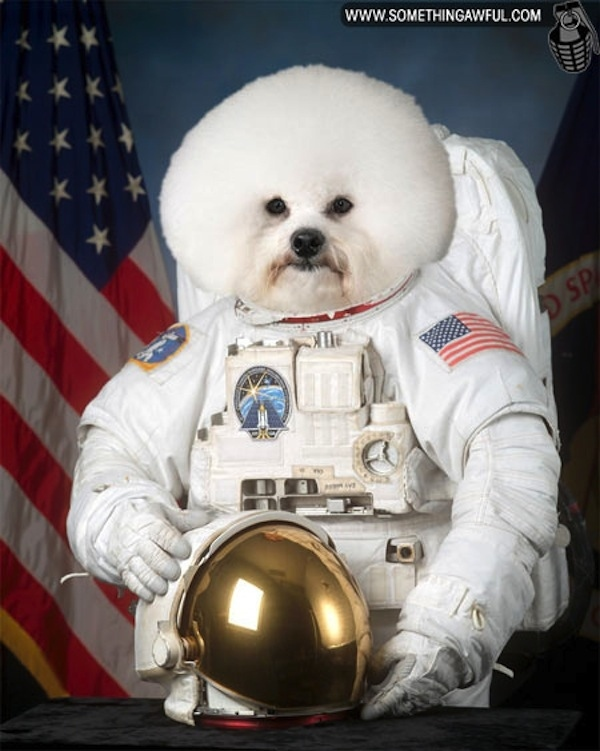 astronaut-dog