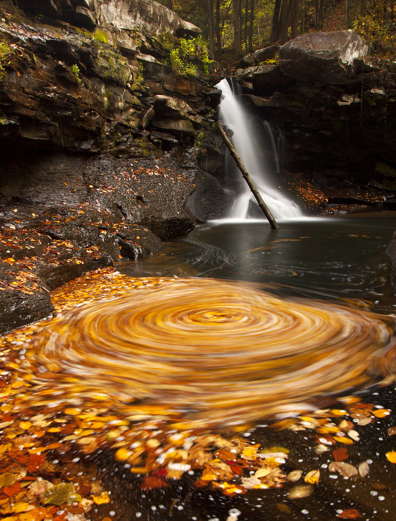 whirlpool of leaves