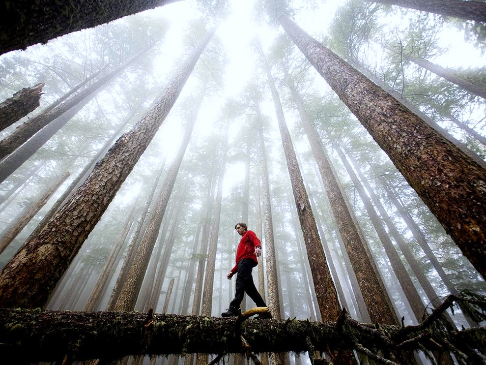 hiking-olympic-national-park-..-you're-gonna-be-amazed
