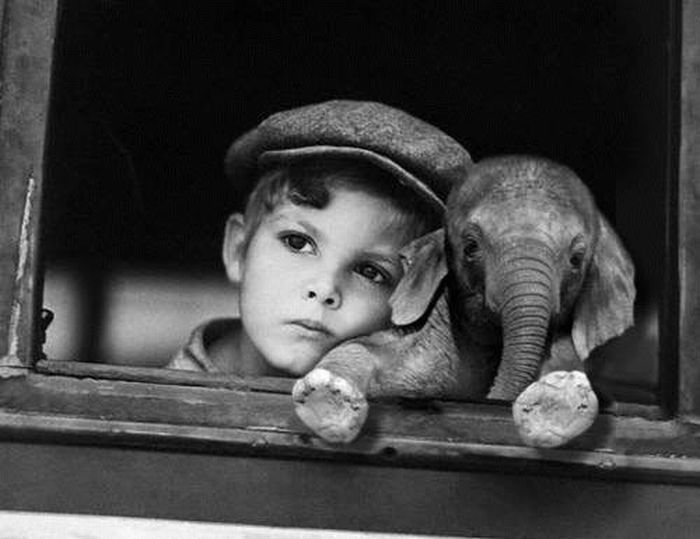 just a boy and his elephant