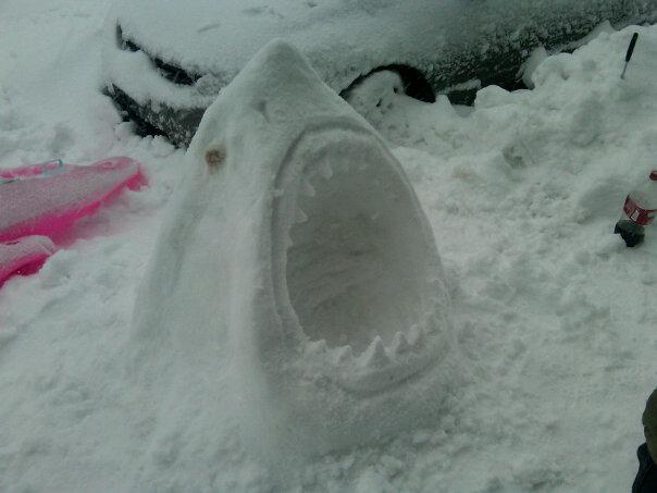 iama-shark