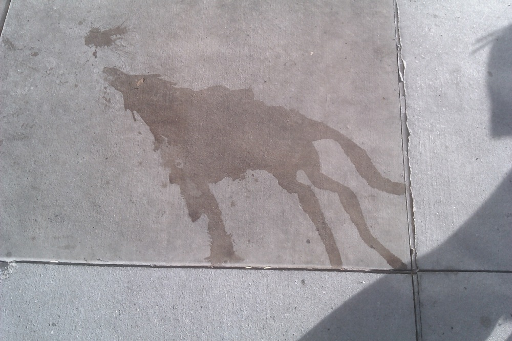 somebody-spilled-a-wolf-howling-at-the-moon-outside-the-mall.-pretty-amazing