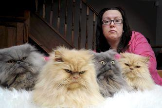 okay-kitties,-look-real-mean-for-the-cam---wait...-wtf