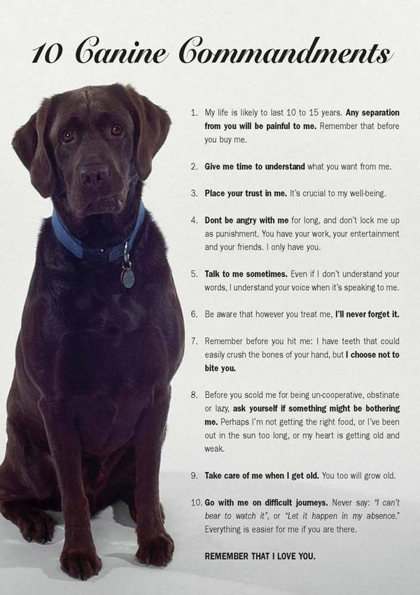 The 10 Canine Commandments