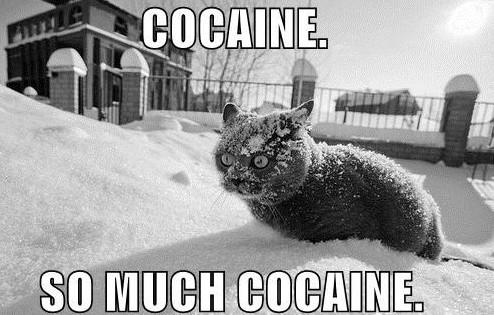 Coke Cat