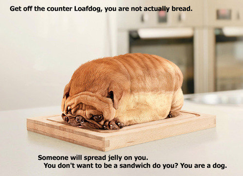 Loafdog.