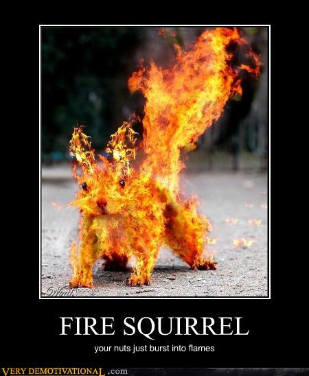demotivational posters - FIRE SQUIRREL