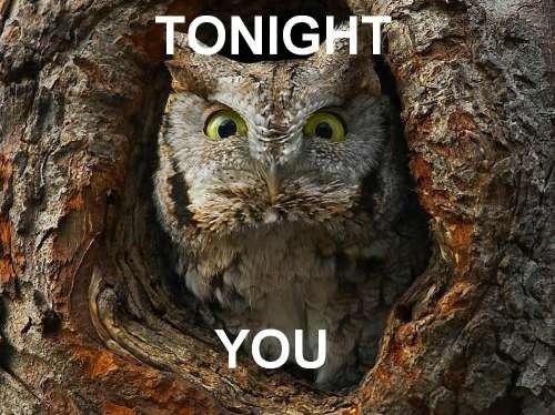 funny owl pics