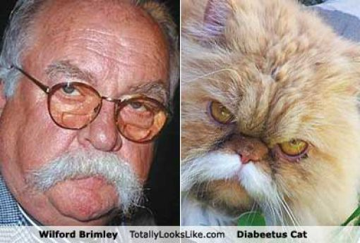 Funny Look Alikes 10 Pics on Colonial Penn Life Insurance