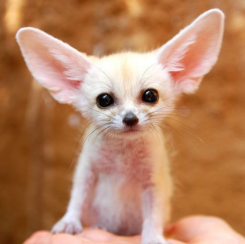 A baby fox. That is all.