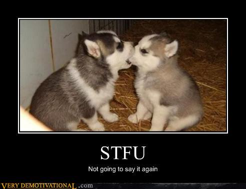 demotivational posters - STFU