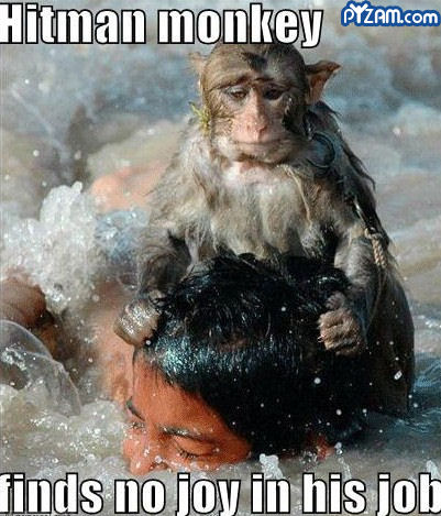 Hitman Monkey funny picture