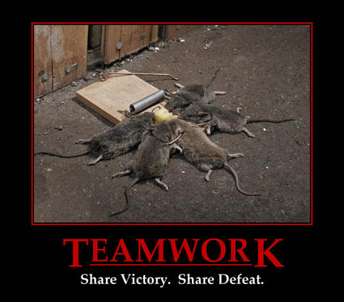 Teamwork | Funny Pictures