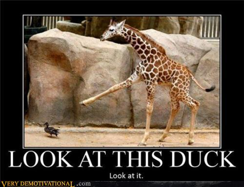 demotivational posters - What the Duck?