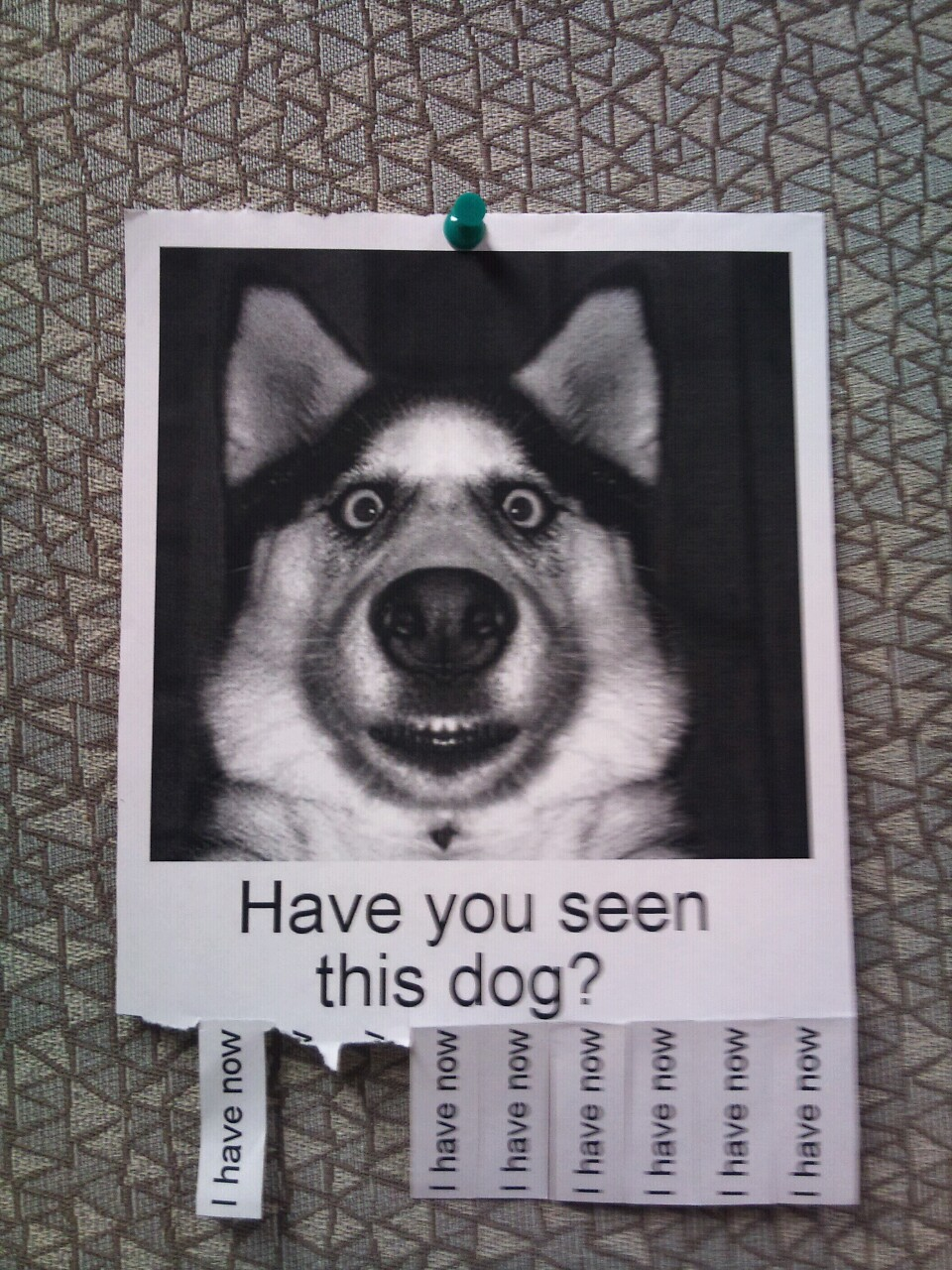 Have you seen this dog – Lost Dog Flyer Template Word