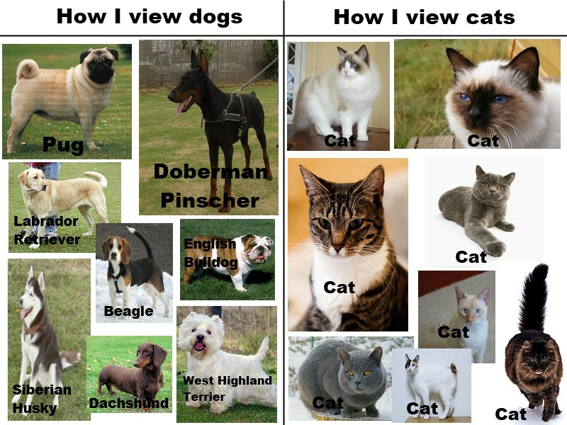 Funny Memes For Lovers : Sorry cat lovers. this is true funny pictures quotes pics
