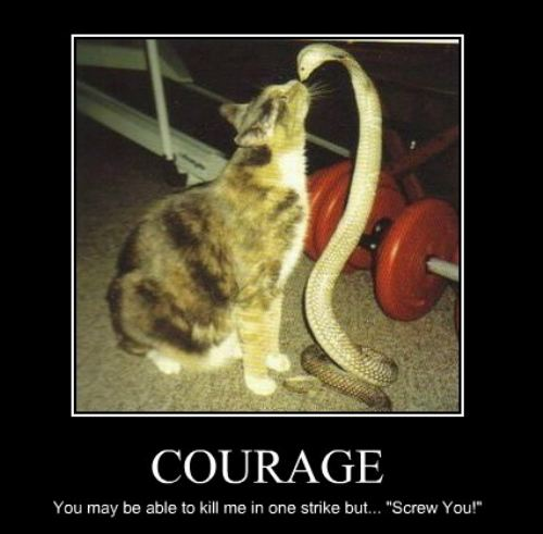 Funny Courage Pictures Funny Pictures
