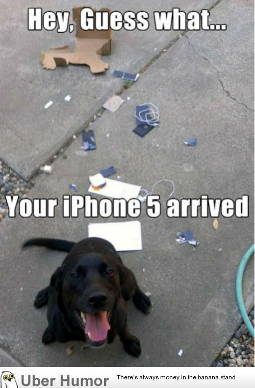 Thanks dog… | Funny Pictures, Quotes, Pics, Photos, Images