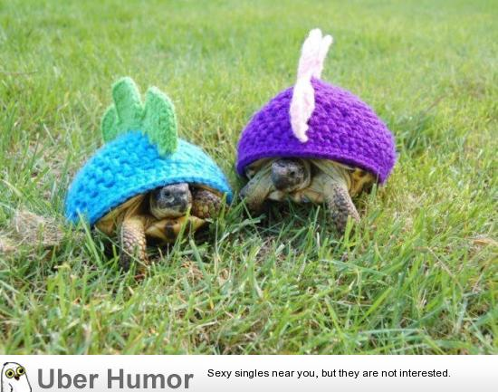 Guy knits turtle caps to make them look like dinosaurs.