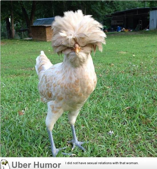 Funny Chicken Quotes And Sayings Quotesgram