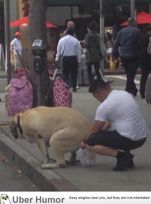A full grown dog in an Asian country, what are the odds ...