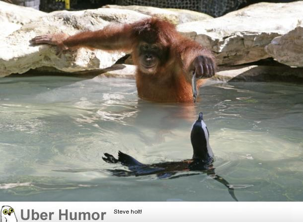Kindness In Animals Is Compelling Funny Pictures Quotes Pics