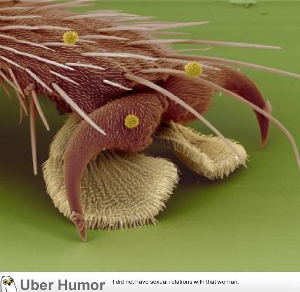 Pure Beauty Household Objects Magnified To Stunning