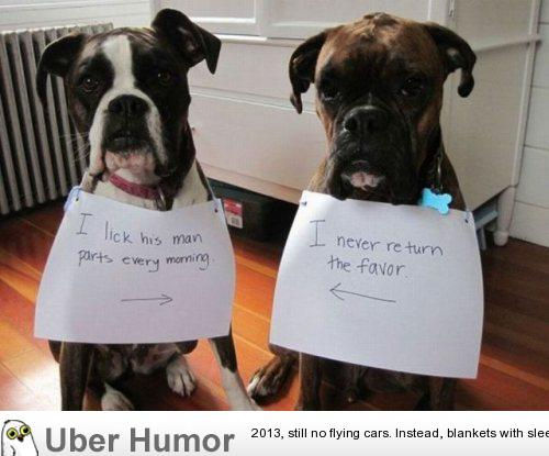 Quotes About Backyard Breeders : BOXER DOG QUOTES FUNNY image quotes at BuzzQuotes