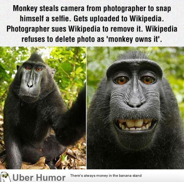 funny monkey quotes