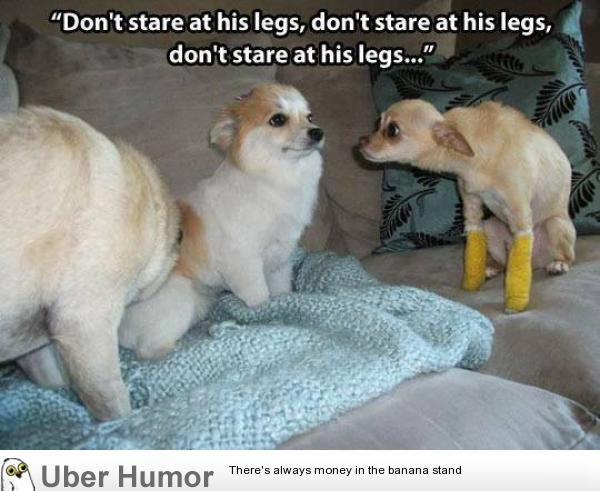 leg day meme dog - photo #17