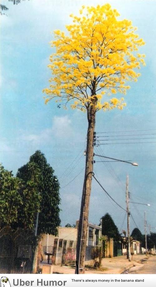The tree that refused to die. | uberHumor.com
