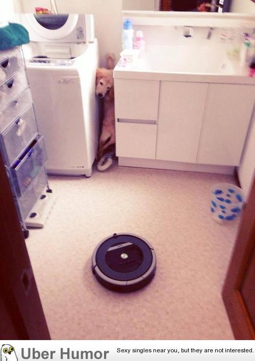 Roomba, the NOPE of the dog world