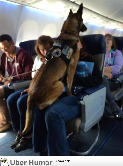 Flight attendant made an announcement to congratulate her for Can service dogs fly in cabin