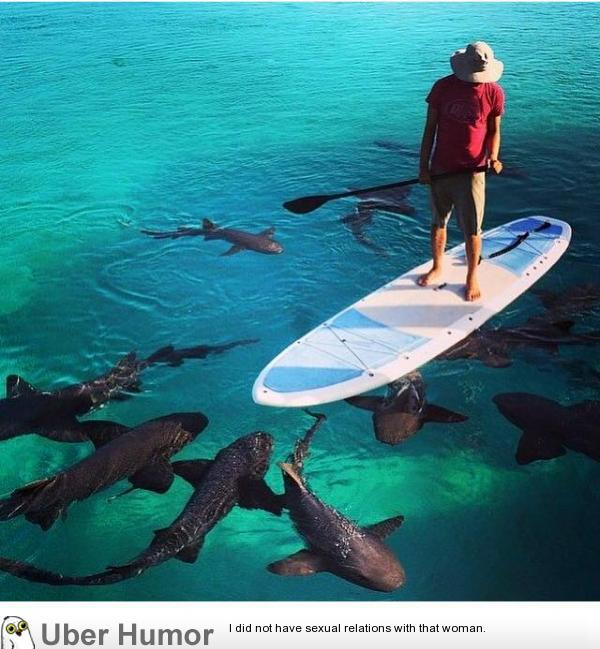 Amazing Picture Taken Of My Cousin On Vacation SHARKS
