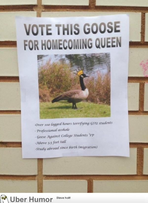 Vote This Goose | Funny Pictures, Quotes, Pics, Photos ...