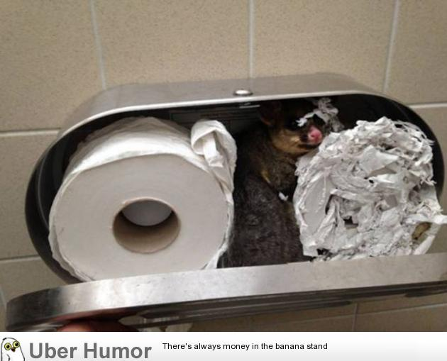 Time To Change The Toilet Paper Roll Funny Pictures