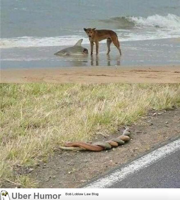 Australia….