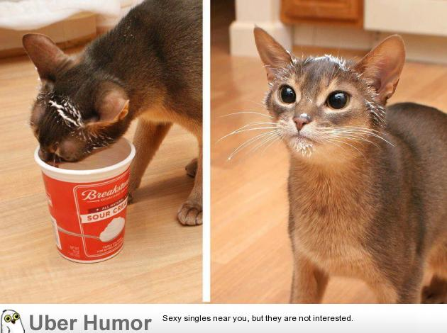 funny pictures