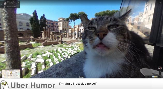 Image of: Memes Funny Pictures Uberhumor This Cat In Google Street View Funny Pictures Quotes Pics