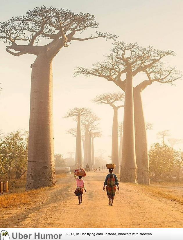 Off to the market in Madagascar among the Baobab trees