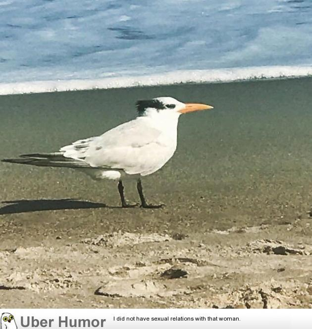 This Danny DeVito looking seagull