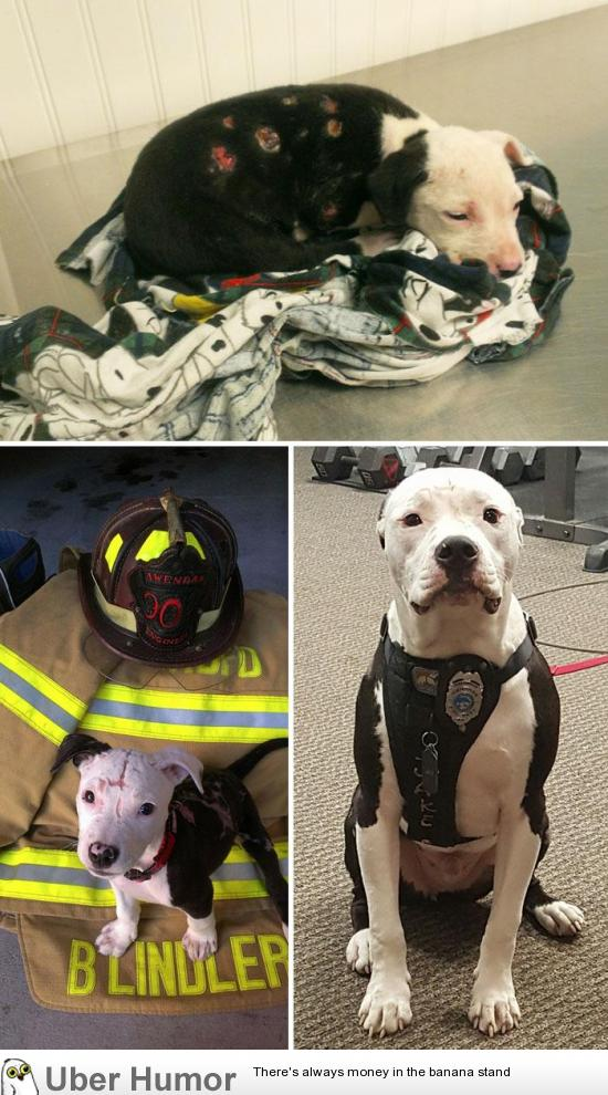 A Puppy Saved From A Fire Becomes A Firefighter