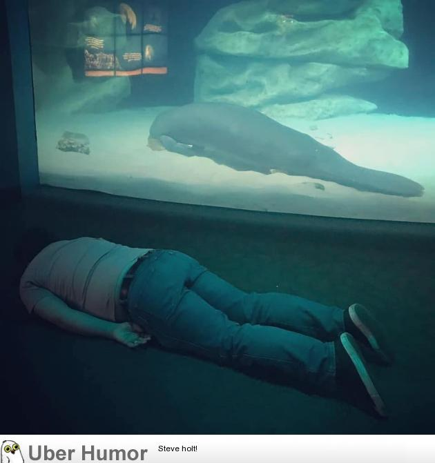 My friend's cousin visited the aquarium today  | Funny Pictures