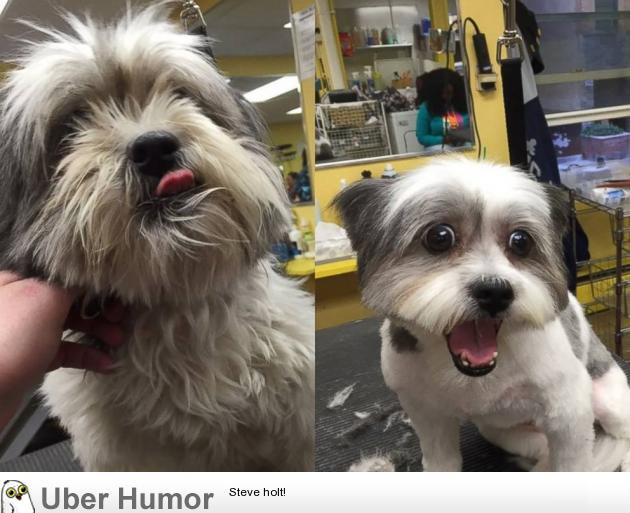 Mark Imhof, also known as 'The Dog Guy,' is a dog groomer who gives free haircuts to shelter dogs in order to increase their chances at being adopted. He's donated his time and services to nearly 1,000 dogs in the last three years. The results are fantastic, like this very stunned pup.