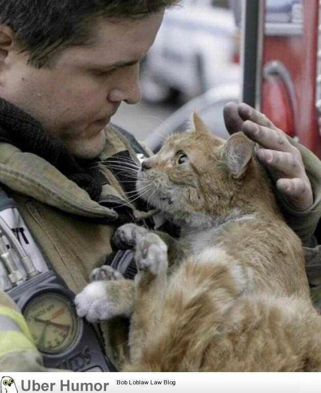 rescued kitty from a fire, look at the gratitude in those eyes.