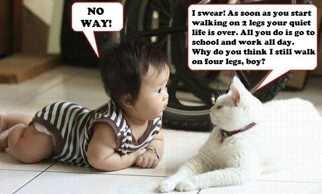Epic Cat is EPIC | Funny Pictures, Quotes, Pics, Photos, Images. Videos of Really Very Cute animals.