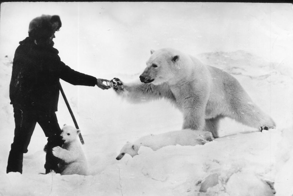 Man feeding polar bear with milk | Funny Pictures, Quotes ...