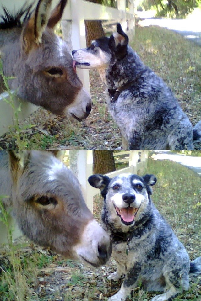 Dog Licking Ass | Funny Pictures, Quotes, Pics, Photos