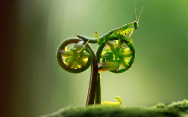 Praying mantis on a Natural Bicycle | Funny Pictures, Quotes, Pics ...